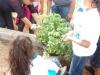 marianna-plants1