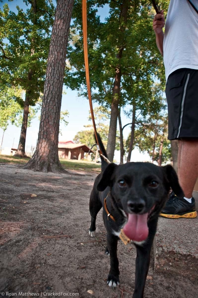 eamd-paws-in-the-park-2014