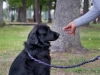 eamd-paws-in-park2-2543