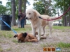 eamd-paws-in-park2-2602