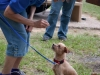 eamd-paws-in-park2-2618