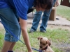 eamd-paws-in-park2-2619