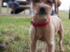 eamd-paws-in-park2-2632