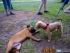 eamd-paws-in-park2-2702