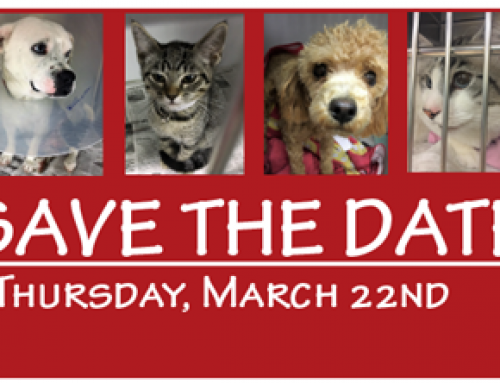 Save the Date: Big Give, March 22